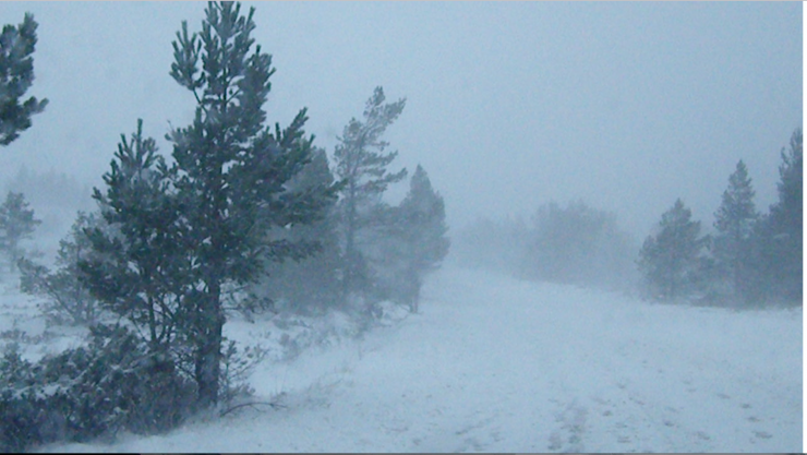 Blizzard conditions on the ski road at 500m