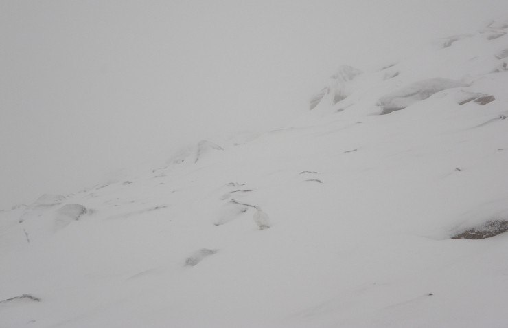 Poor visibility all day, this was at 900m. Spot the ptarmigan